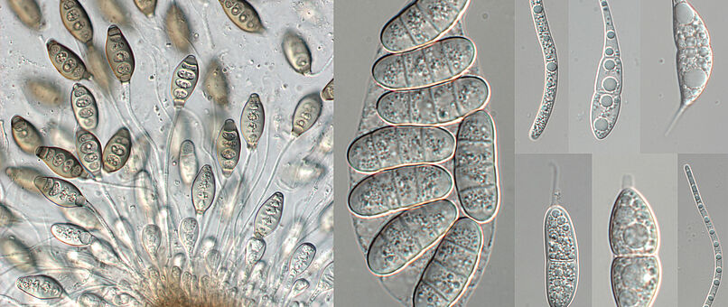 applied mycology Read the latest chapters of applied mycology and biotechnology at  sciencedirectcom, elsevier's leading platform of peer-reviewed scholarly  literature.